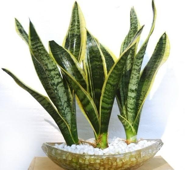 植物去除甲醛